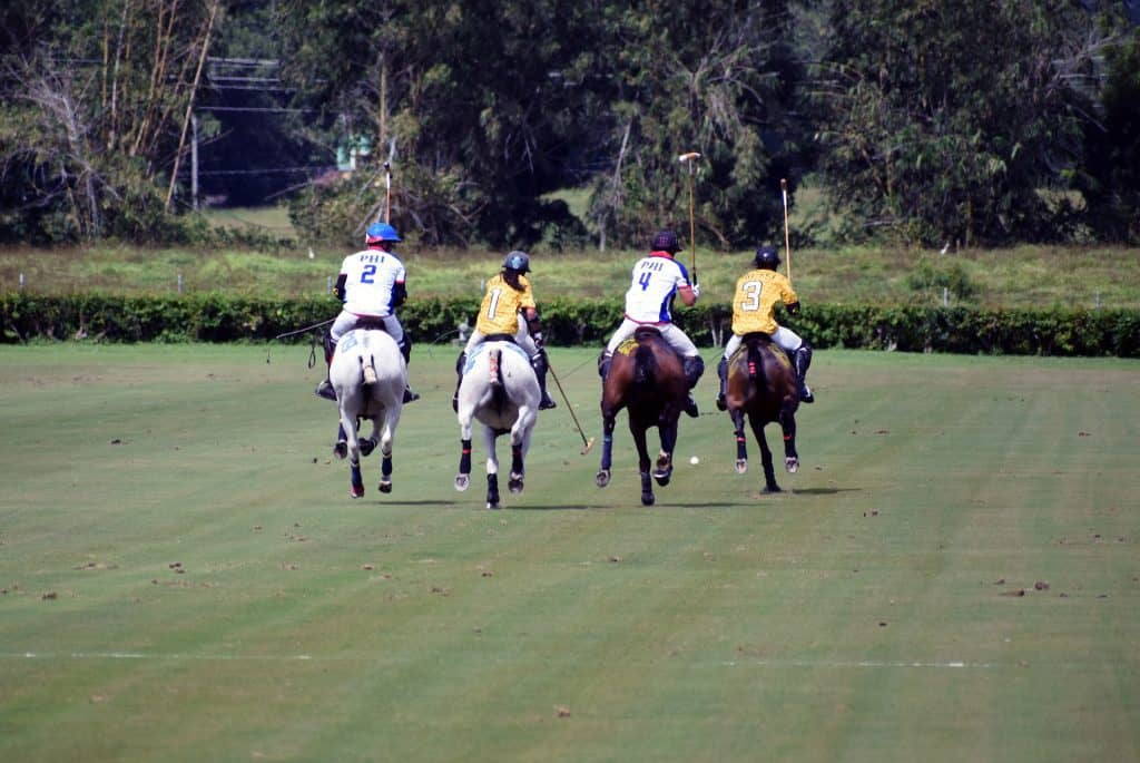 How fast do polo ponies run? Which Horses To Considered For Polo!